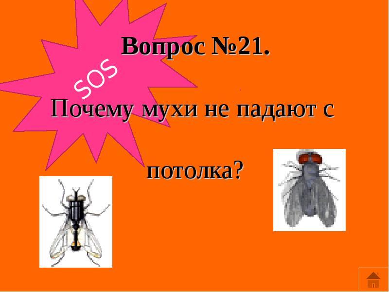 Как муха садится и держится на потолок. почему муха не падает с потолка? как муха сидит на потолке