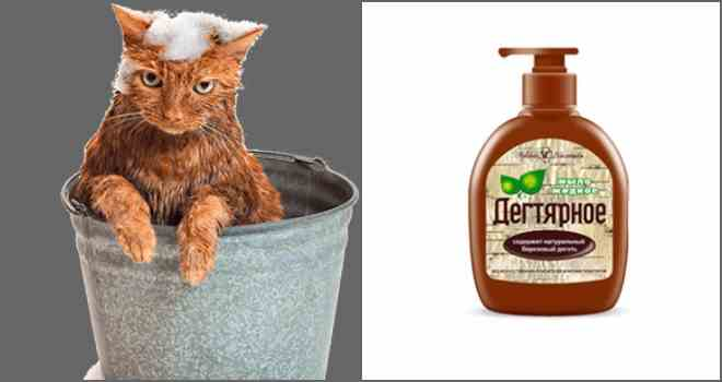 Дегтярное, дустовое, хозяйственное мыло от блох у кошек и собак, как им обработать квартиру