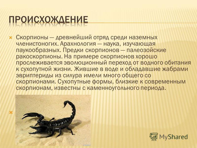 Родители скорпионы — ребенок скорпион