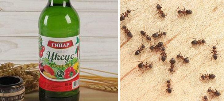 Уксус против муравьев в квартире - как использовать, насколько эффективен способ