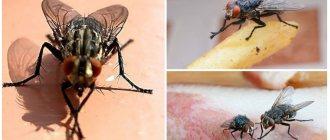 Что делать если проглотил яйца мухи – telegraph