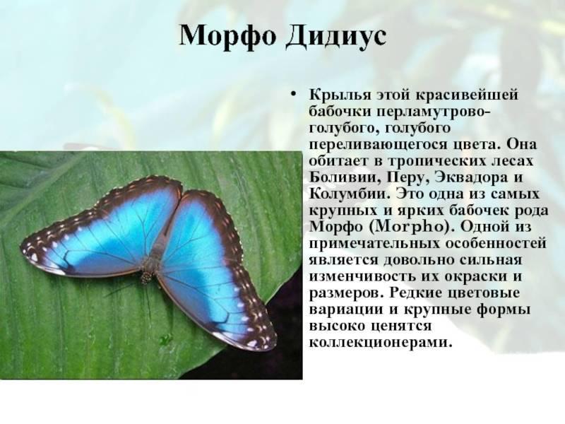 Удивительно красивые бабочки, которых вы ещё не видели ( много фото )