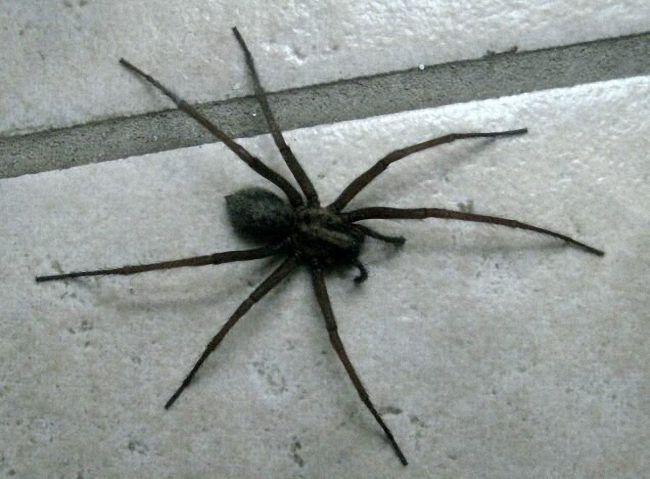 Как избавиться от пауков в частном доме доступными средствами