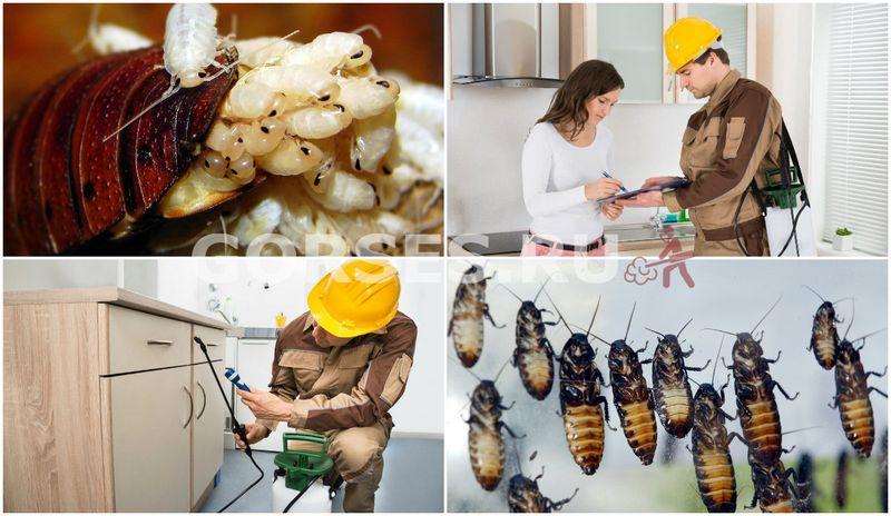 Как избавиться от тараканов – способы и средства для вывода