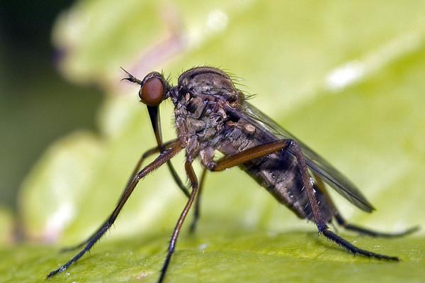Грибной комарик: методы борьбы, фото, как избавиться