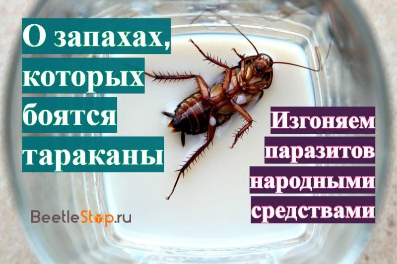 Что отпугивает тараканов в квартире?