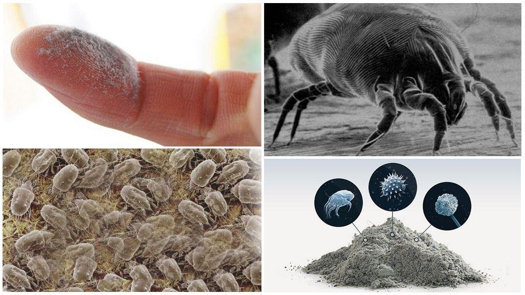 Пылевые клещи (бельевые, постельные, домашние) - как избавиться и как выглядят?