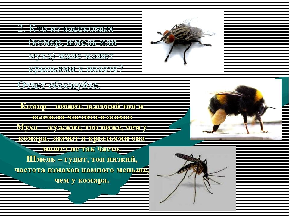 Почему муха жужжит а комар пищит. почему муха издает жужжание, а комар – пищание? откуда берется звук