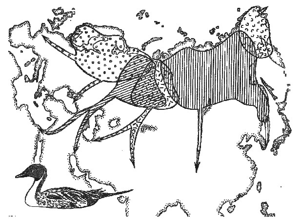 Божья коровка: ее повадки, виды, ареал обитания, видео, фото и многое другое
