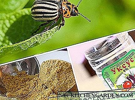 Горчица против колорадского жука: применение в садоводстве