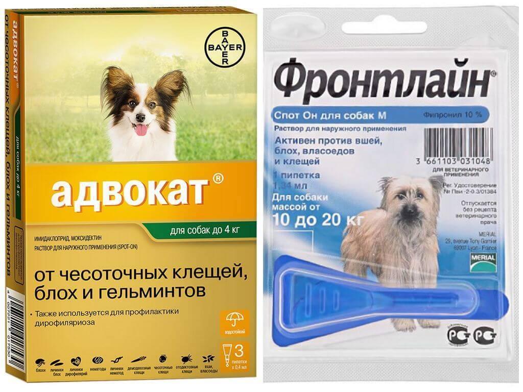 Обзор народных средств от клещей для собак