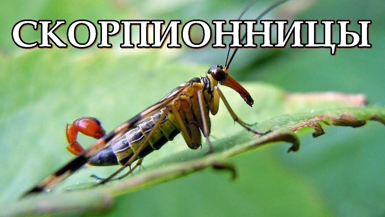 Народный календарь знака скорпион: боги-покровители, праздники, ритуалы