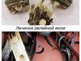 При какой температуре погибает моль и ее личинки