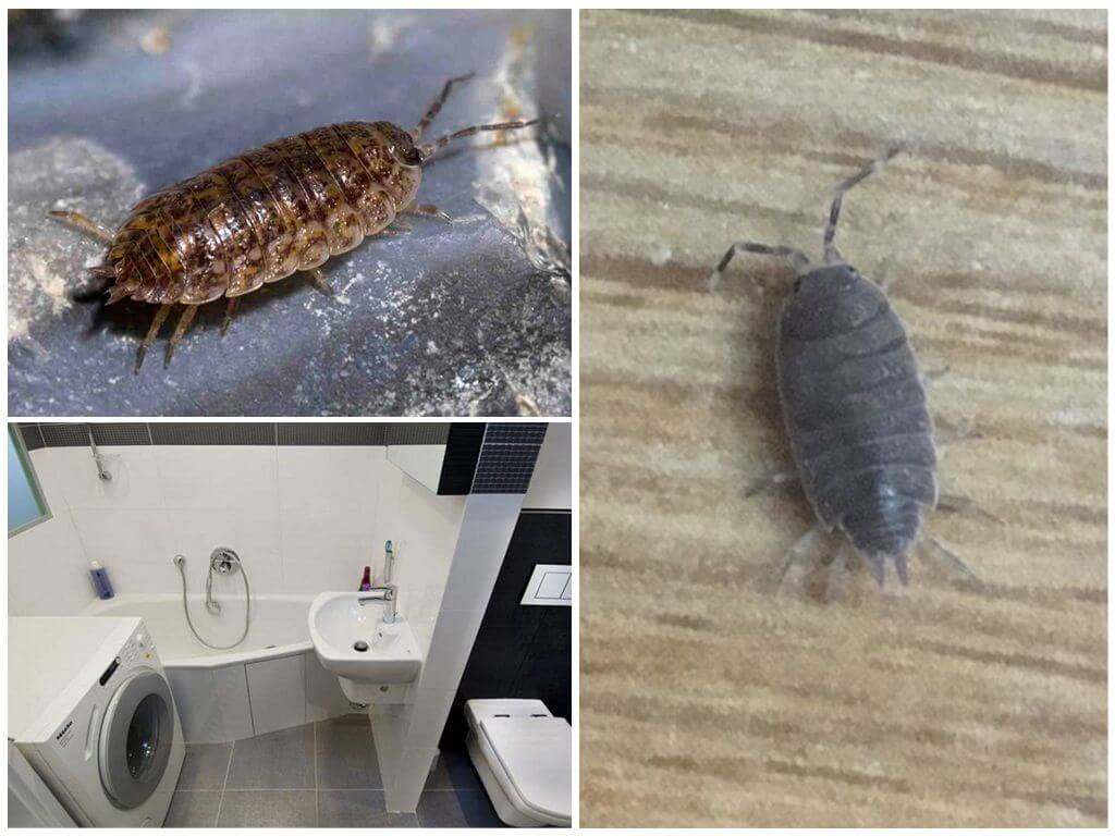 Как избавиться от мокриц в ванной комнате, способы выведения этих насекомых, фото
