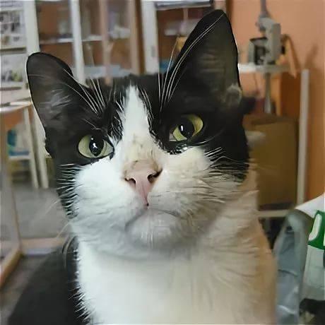 Что делать, если вашу кошку укусила оса?