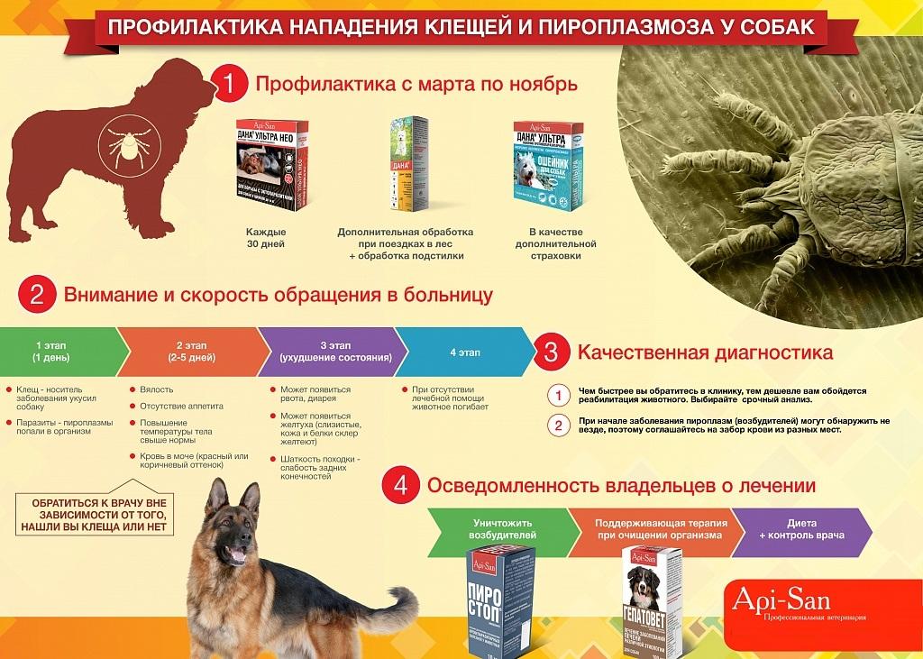 Клещи у собаки - симптомы и способы защиты
