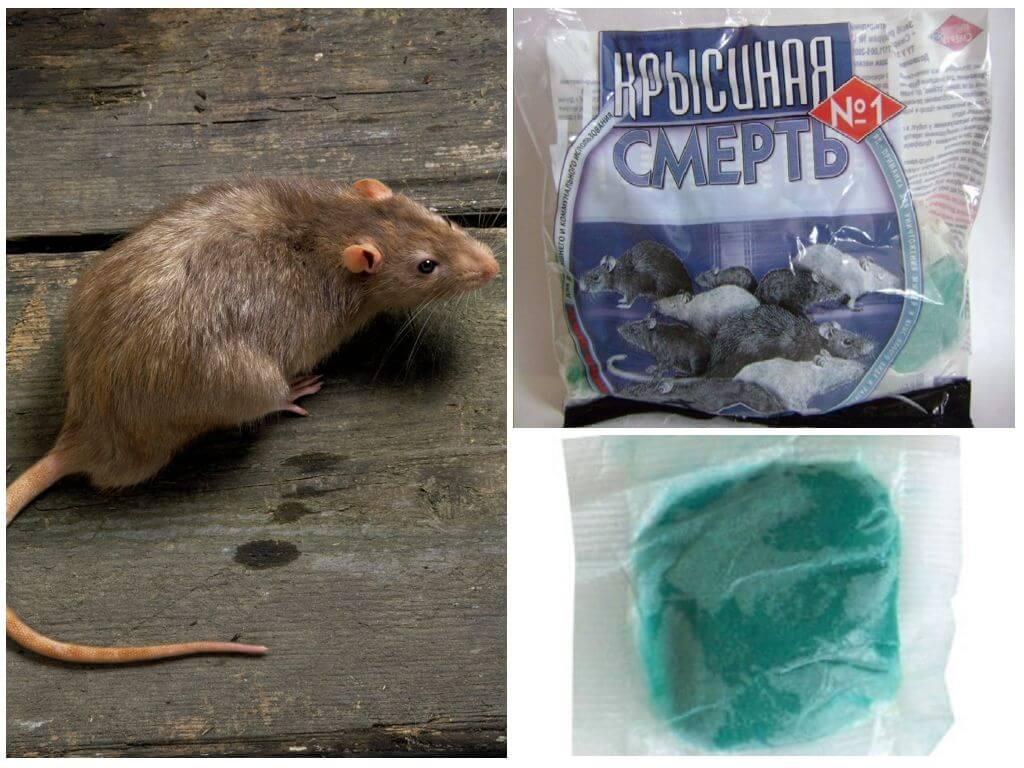 Как выбрать лучшую мумифицирующую отраву для мышей