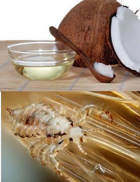 Эффективные масла от вшей и гнид   все о паразитах