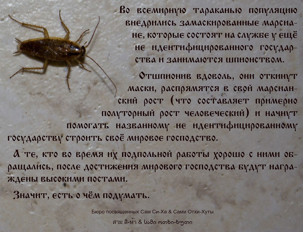 «таракан к чему снится во сне? если видишь во сне таракан, что значит?»