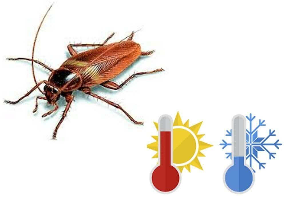 Чего больше всего боятся тараканы? какой запах отпугивает?