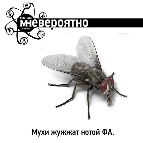 Почему одни мухи жужжат а другие нет. почему жужжат мухи? кто самый быстрый
