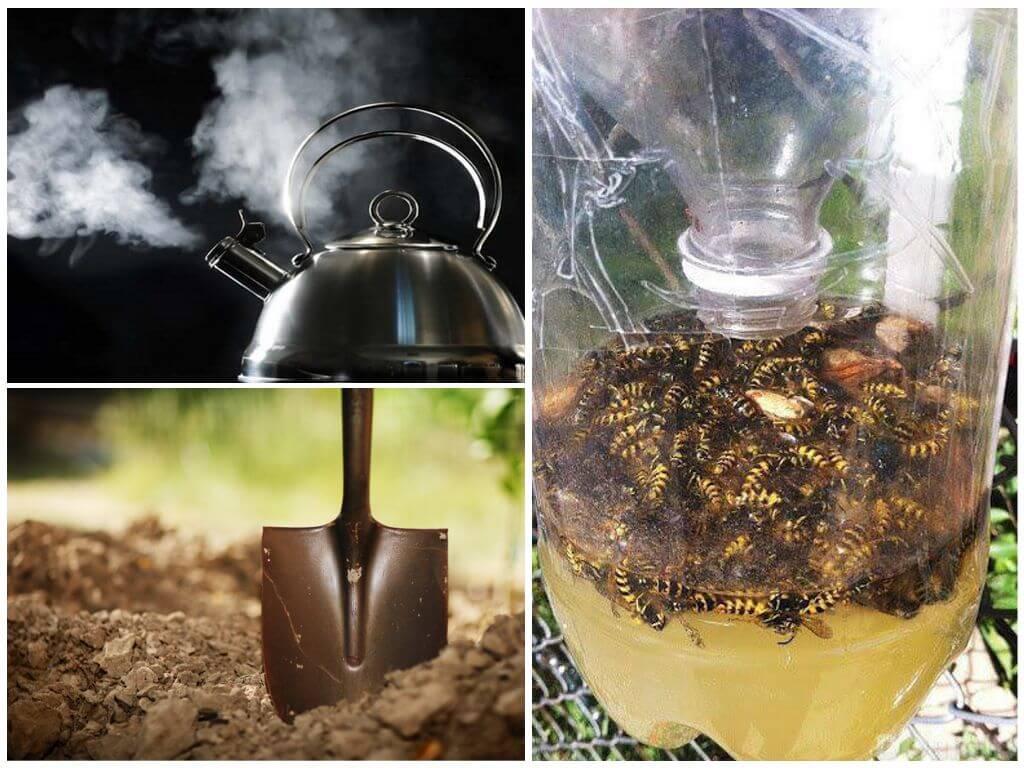 Как избавиться от мошек на кухне: химические и народные средства