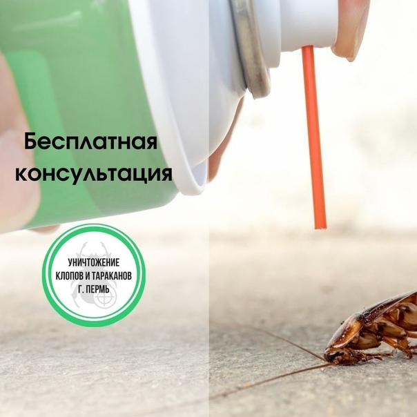 Как навсегда избавиться от тараканов в квартире в домашних условиях
