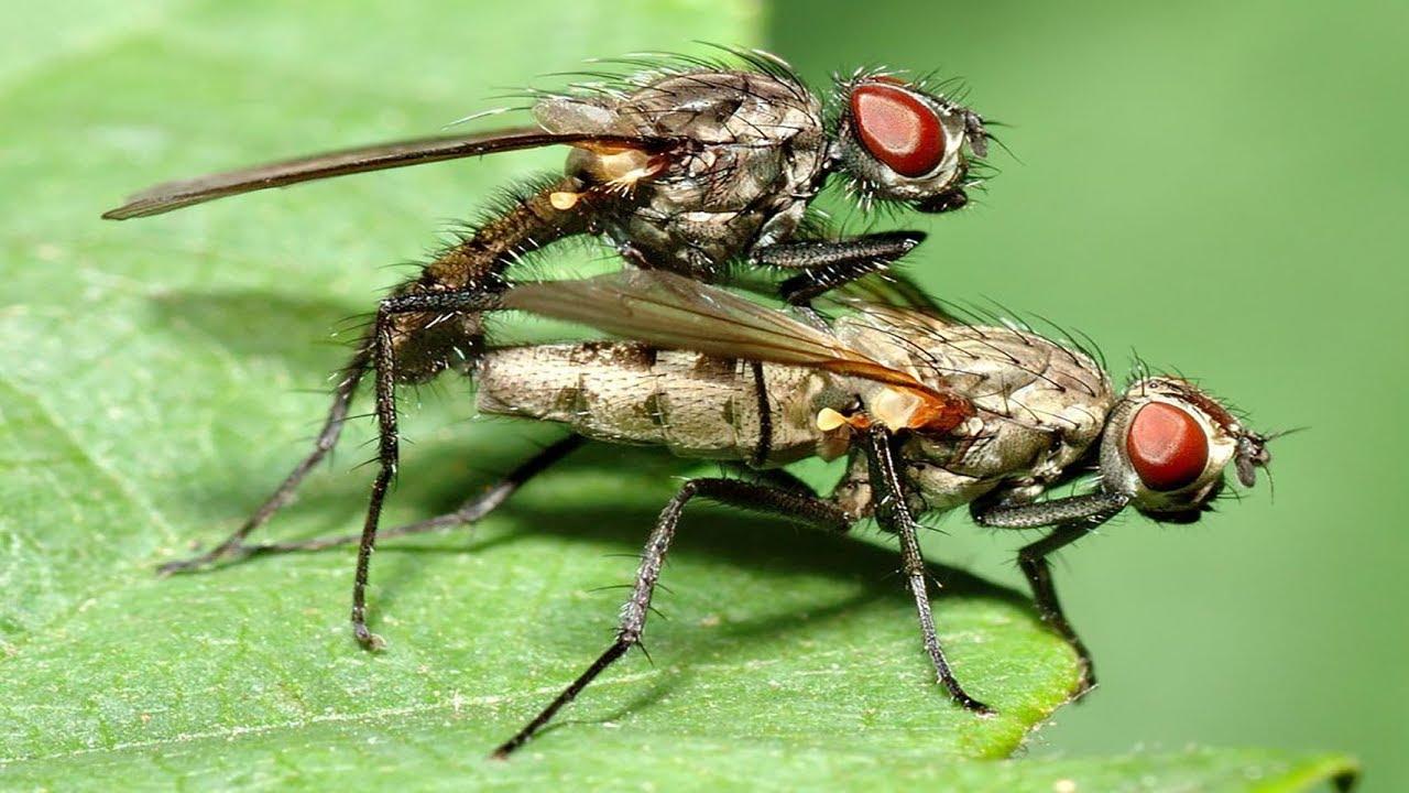 Почему осенью кусаются мухи? причины, фото и видео  - «как и почему»