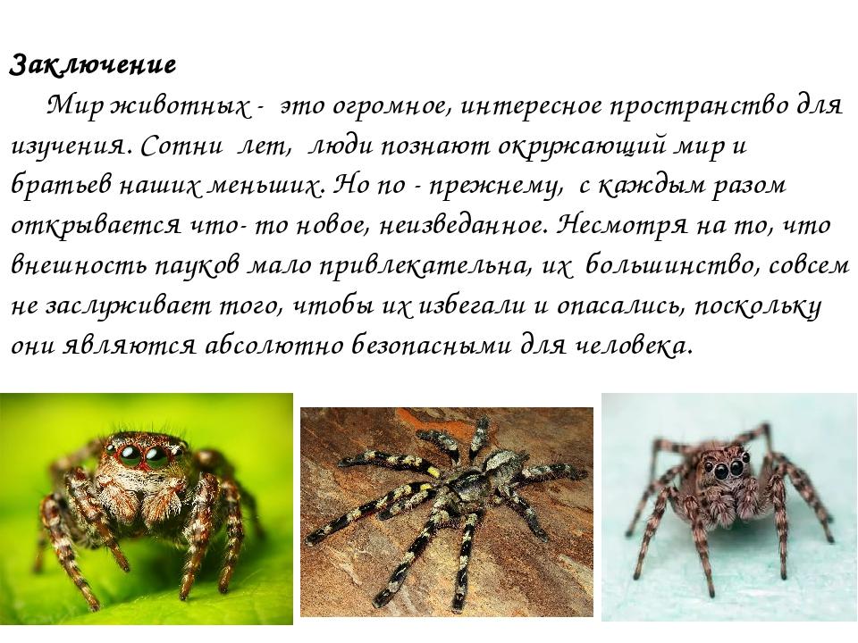 Куда относятся пауки – к насекомым или нет?