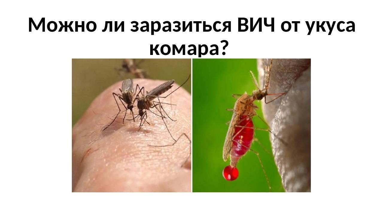 Может ли комар заоазить гепатитом нмли люди в однлм помещении – всё о болезнях печени