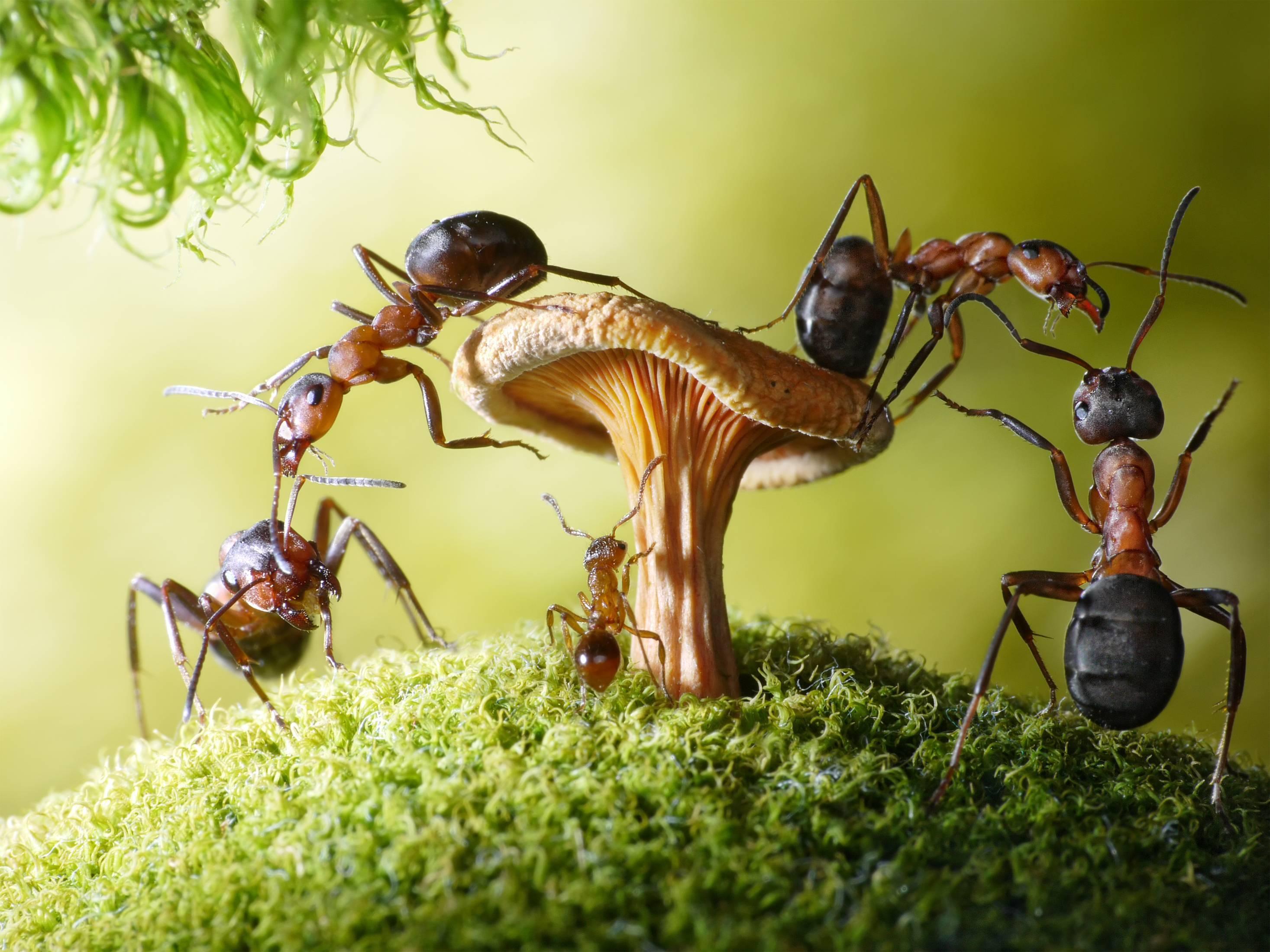 Детям о муравьях – самые интересные факты