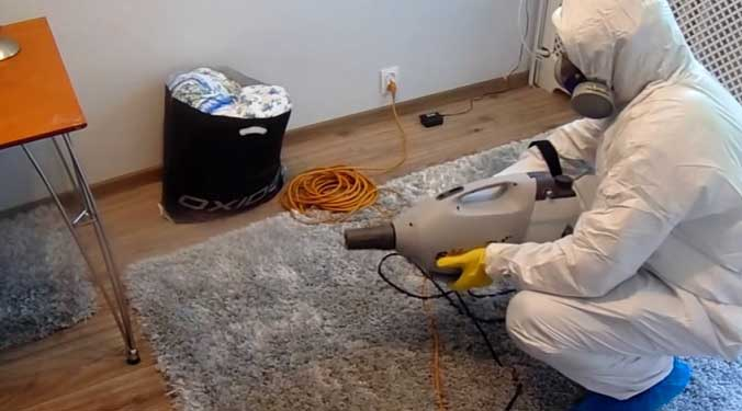 Пылевые домашние клещи: как с ними бороться
