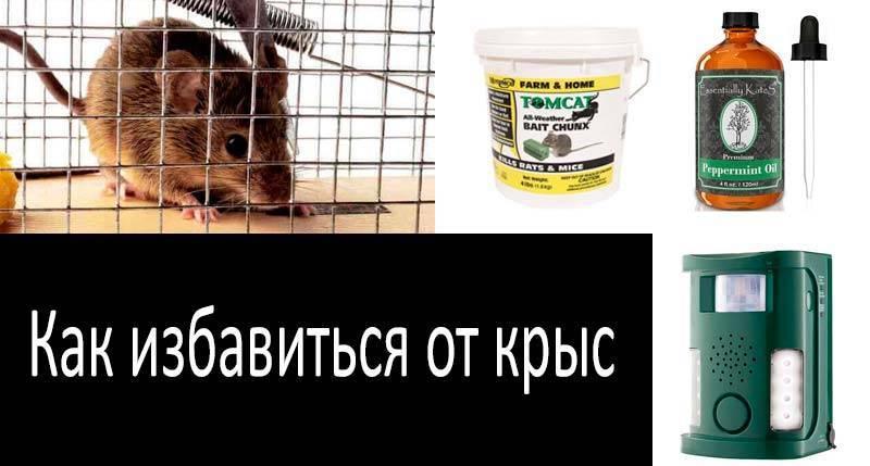 Методы борьбы с крысами в частном доме (химический, механический и народные методы)