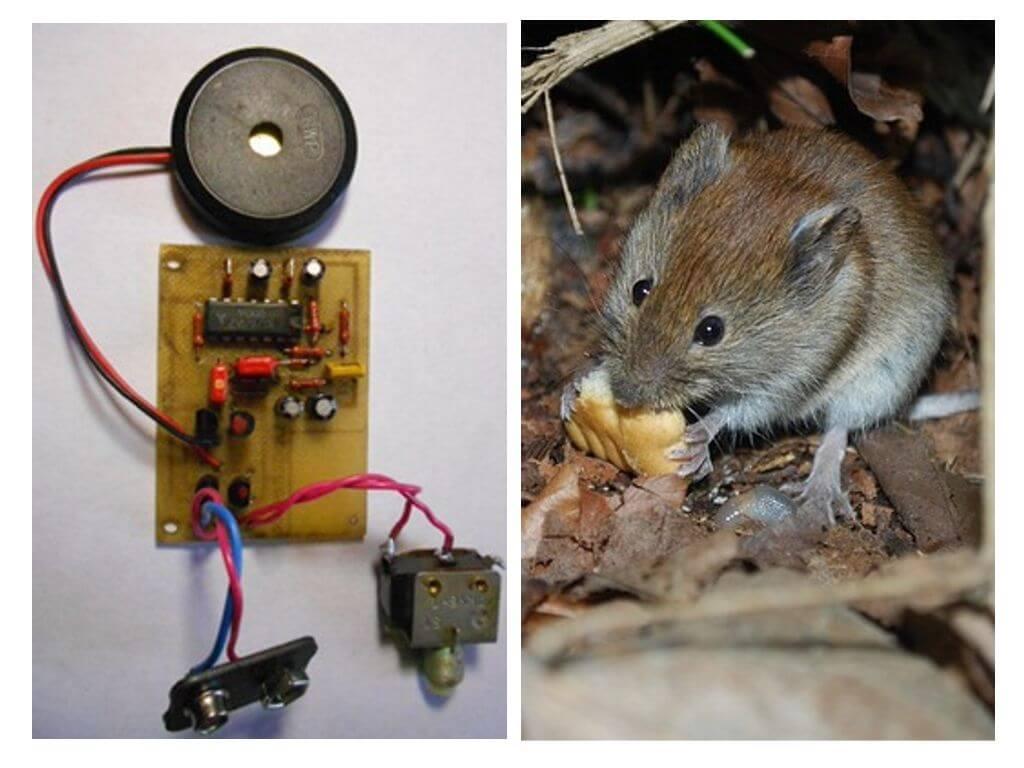Отпугиватель мышей своими руками:схема ультразвукового отпугивателя грызунов