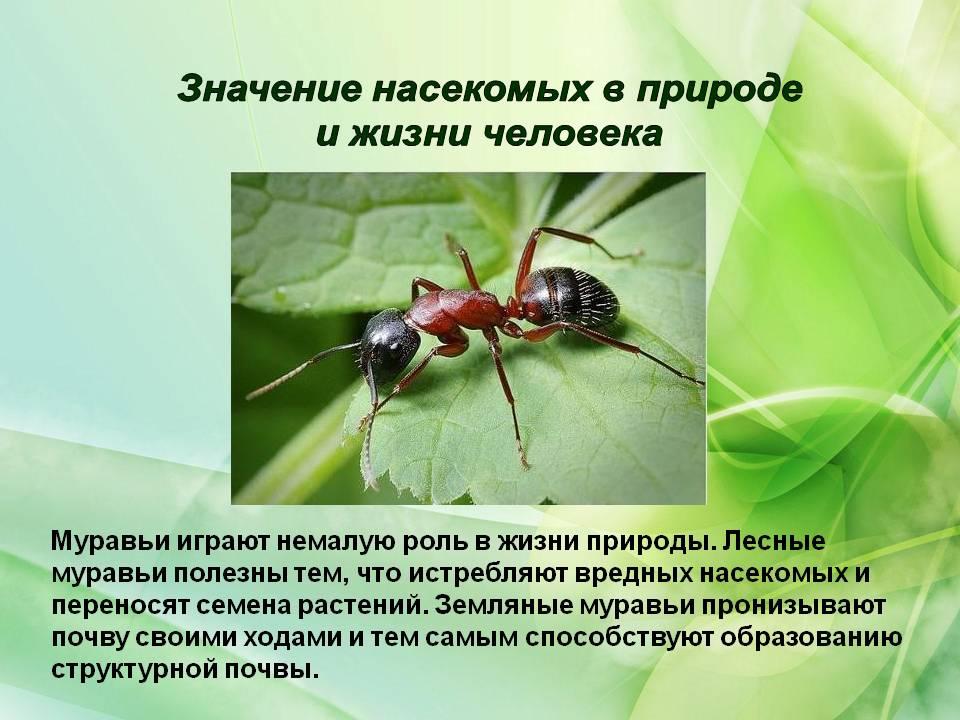 Сколько живут осы