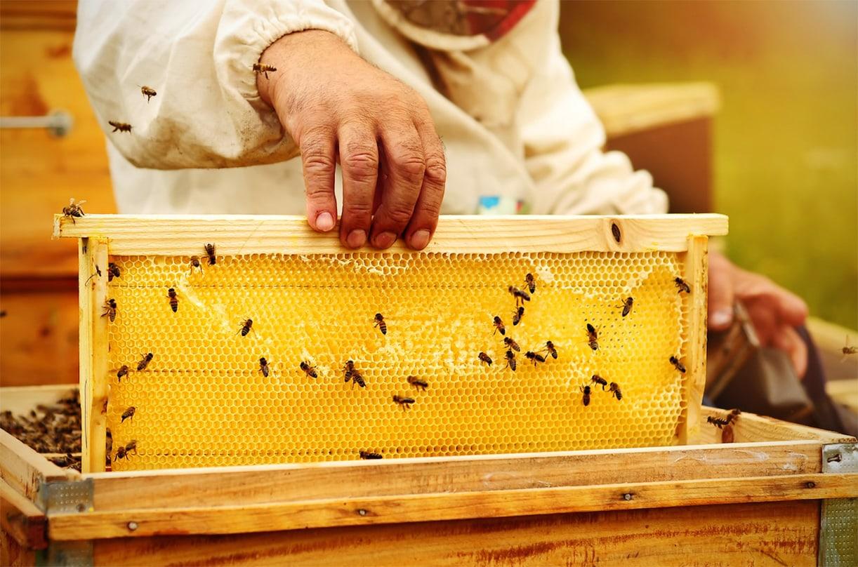 Как пчелы делают мед