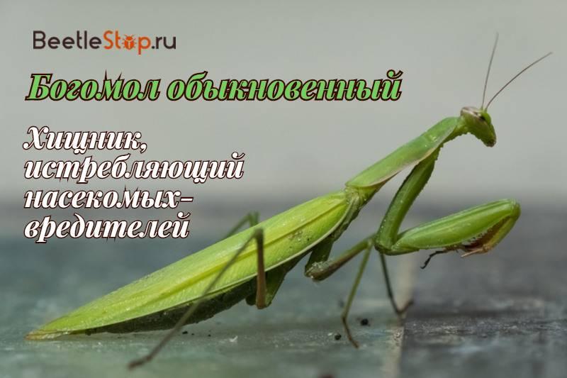 Как размножаются насекомые: описание основных способов и интересные факты