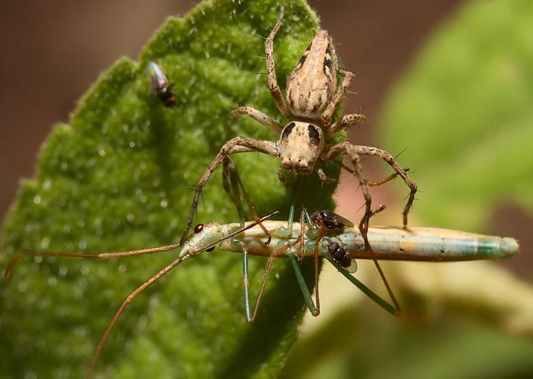 Чем питается паук птицеед: чем кормить птицееда в домашних условиях, что нельзя давать