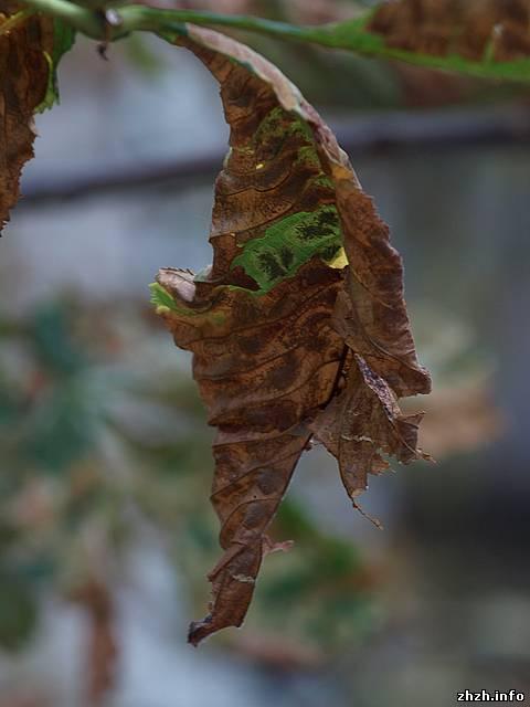 Защита растений от листовых минёров. листовая минирующая моль. методы борьбы. фото. — ботаничка.ru