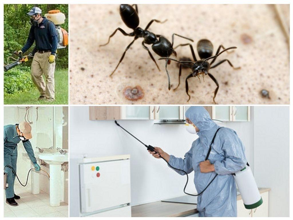 Домашние вредители насекомые, как избавиться, способы борьбы