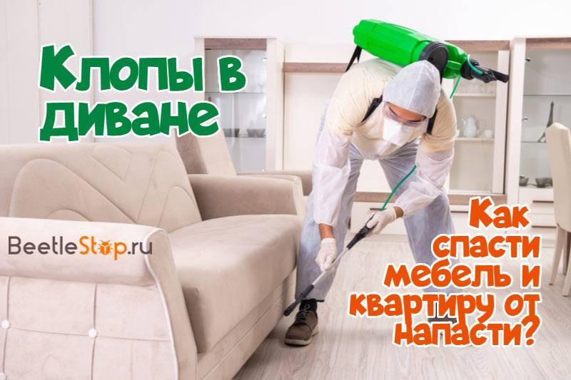 Как вывести клопов из дивана самостоятельно - эффективные методы и народные средства