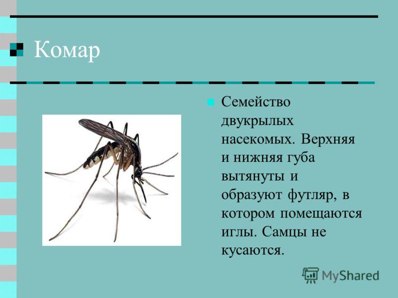 Кто ест комаров