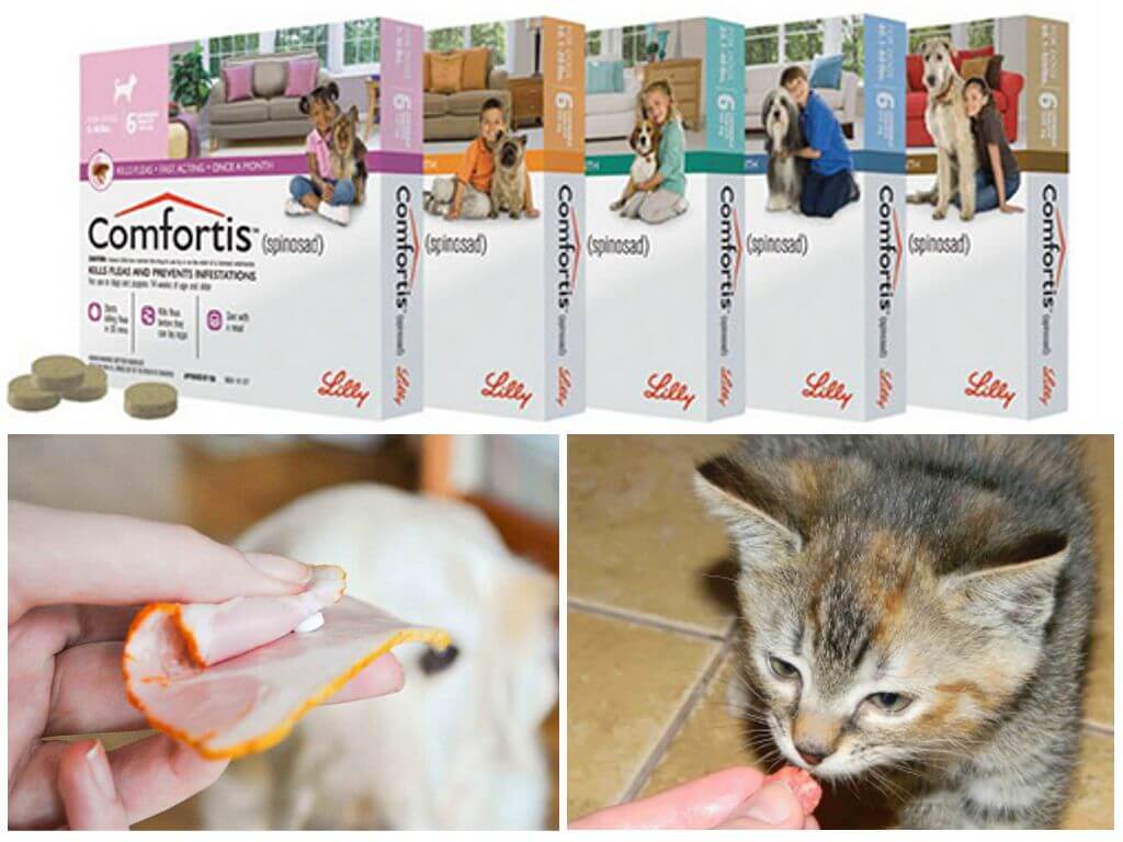 Бравекто, нексгард спектра или симпарика - таблетки для собак от блох, клещей и глистов