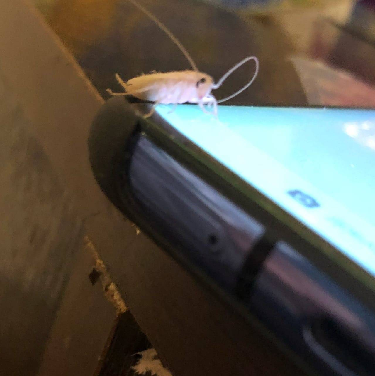 Белые тараканы или страшный мутант