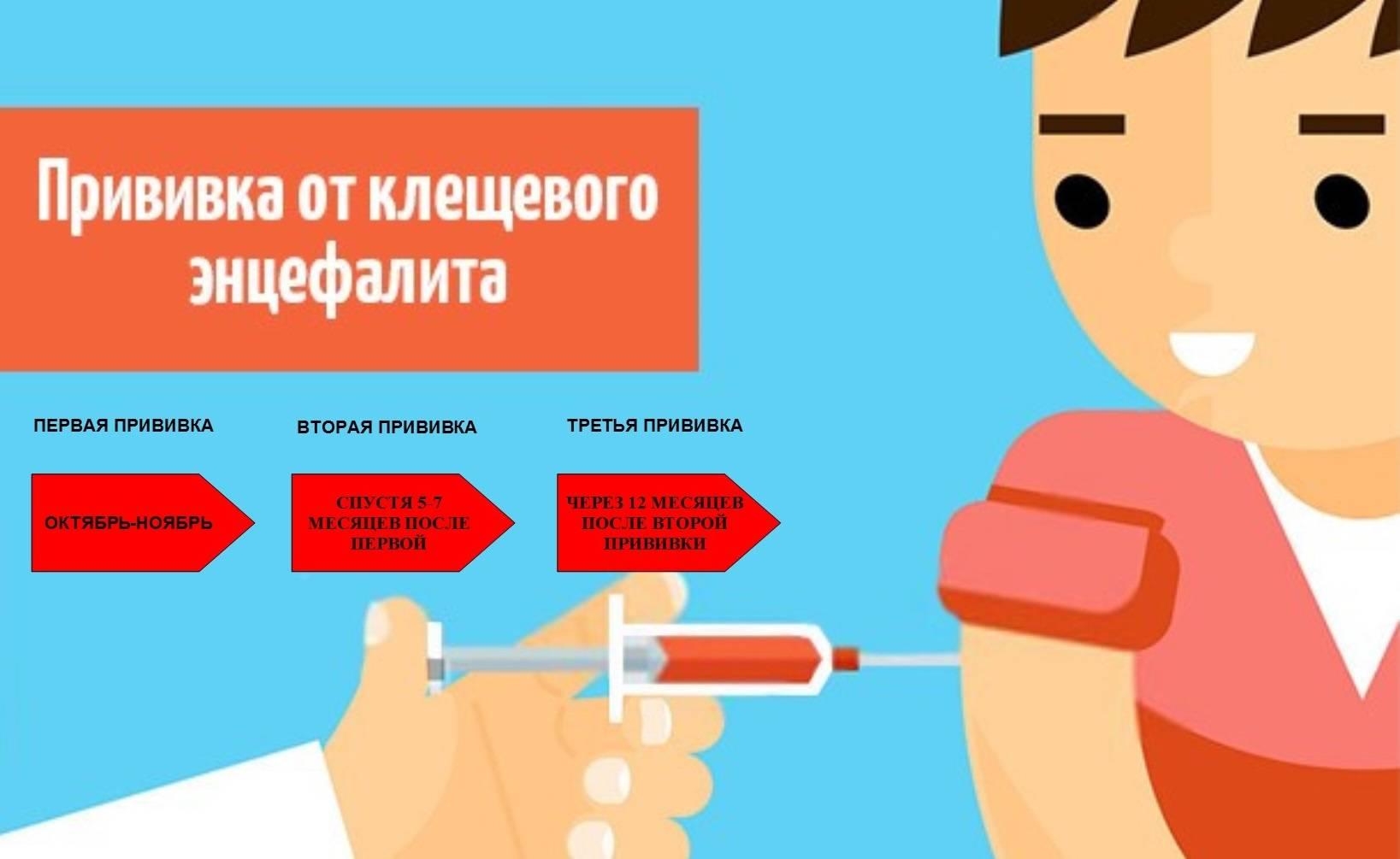 Прививка от клещевого энцефалита - кому показана, противопоказана, цена, побочные действия   азбука здоровья