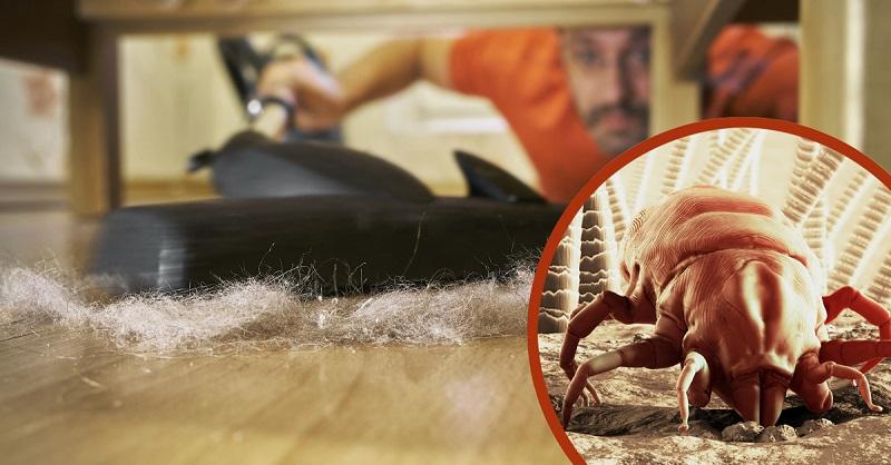 Пылевой клещ: как избавиться в домашних условиях