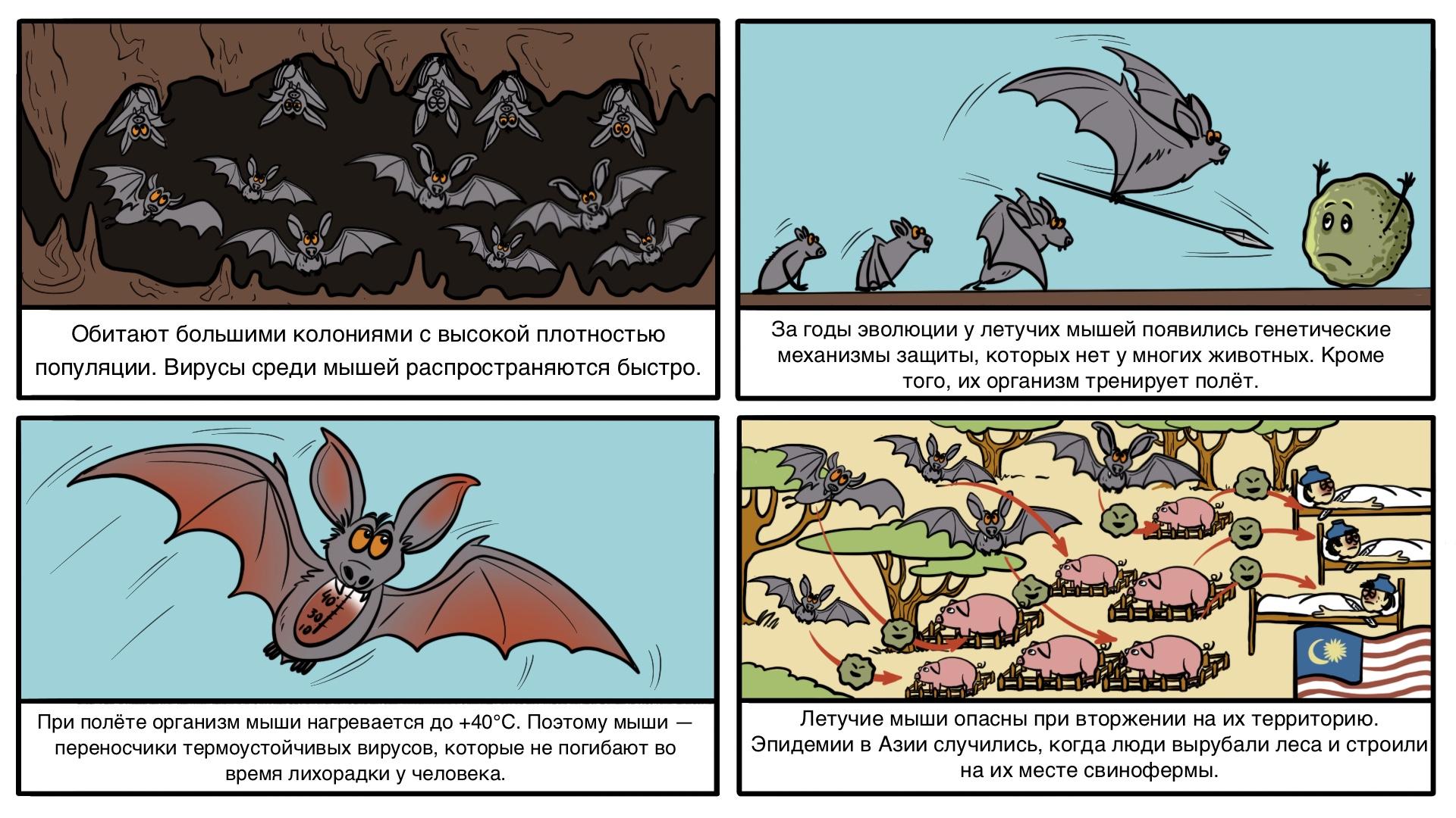 Боязнь мышей или музофобия: причины, признаки, лечение