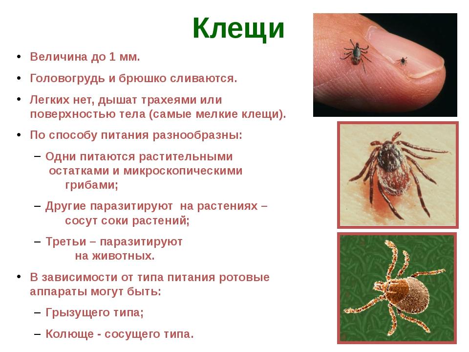 Все виды клещей - описание и характеристика