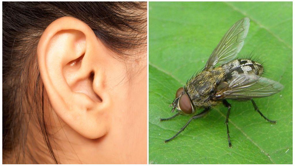 Клеевые ловушки от насекомых и грызунов (виды и способы применения)