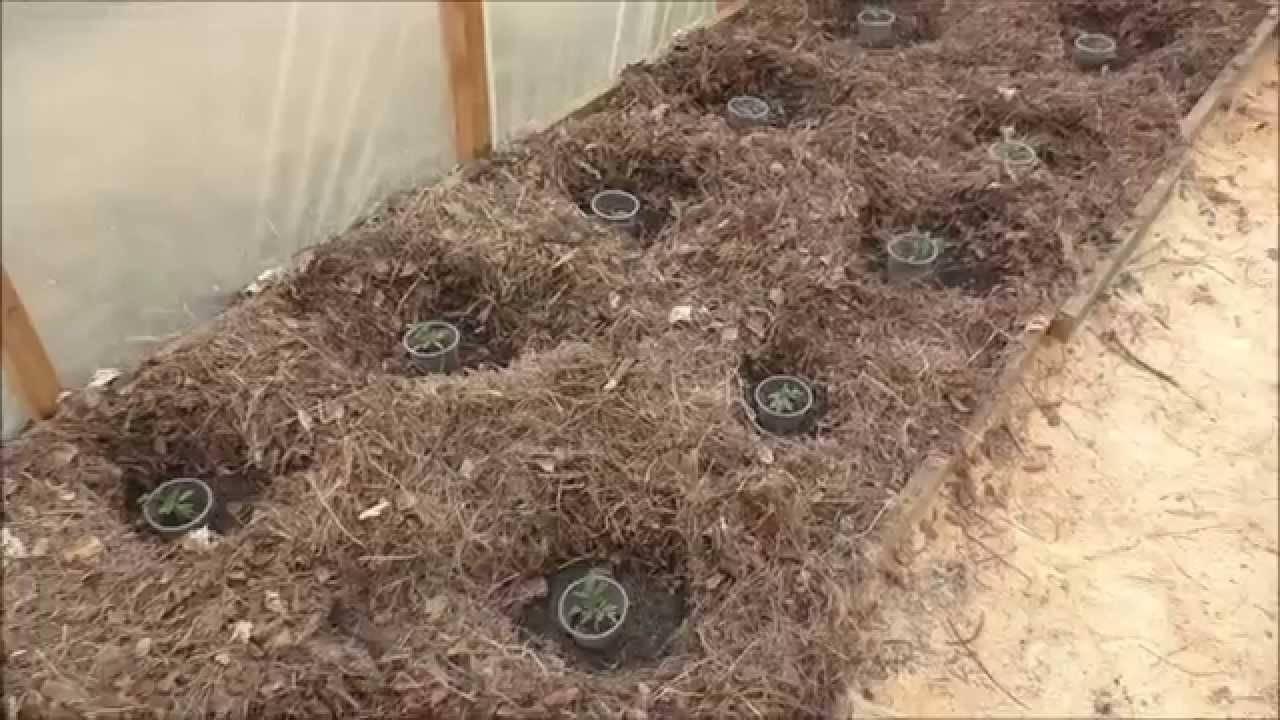 Как избавиться от медведки в теплице из поликарбоната